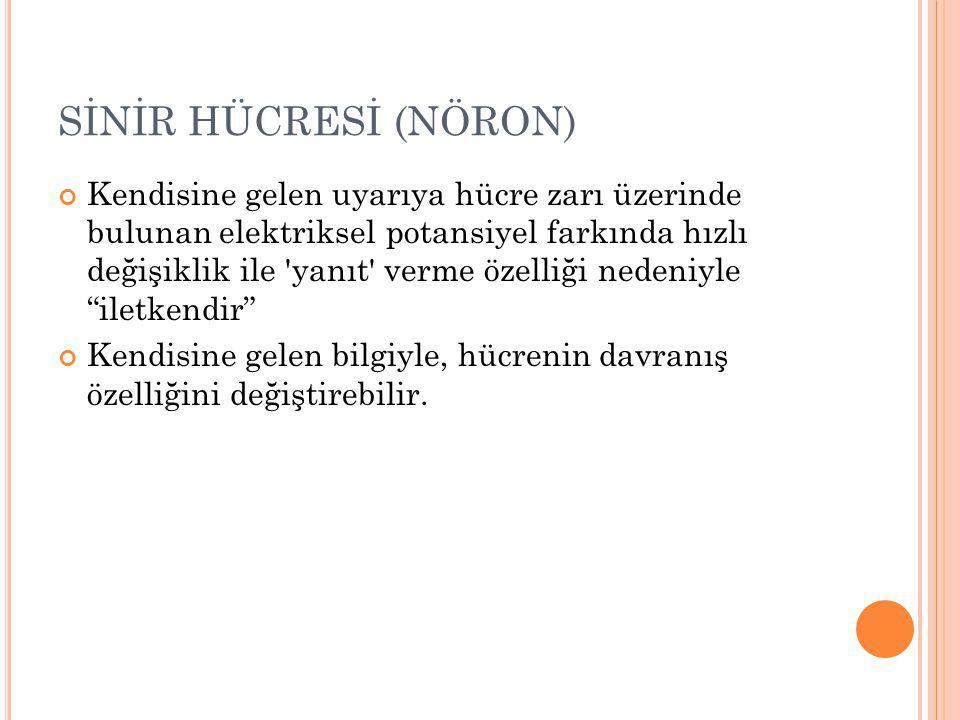 SİNİR HÜCRESİ (NÖRON)