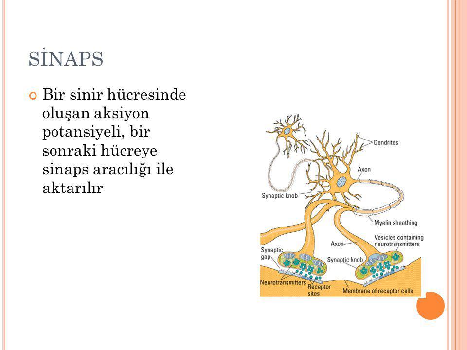 SİNAPS Bir sinir hücresinde oluşan aksiyon potansiyeli, bir sonraki hücreye sinaps aracılığı ile aktarılır.