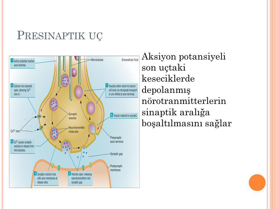 Presinaptik uç Aksiyon potansiyeli son uçtaki keseciklerde depolanmış nörotranmitterlerin sinaptik aralığa boşaltılmasını sağlar.