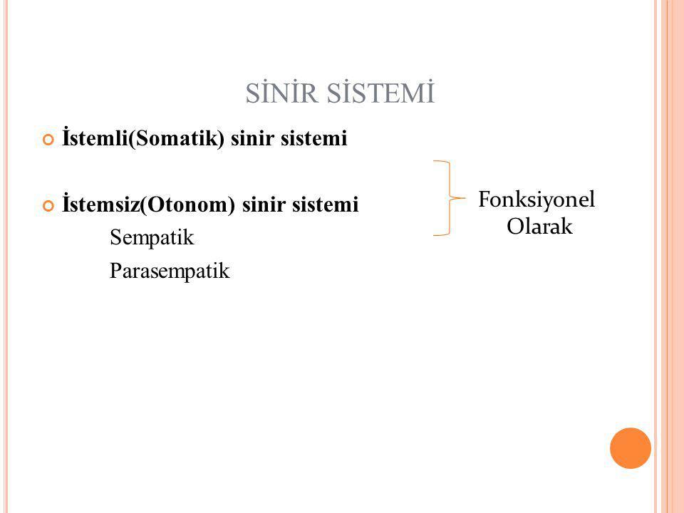 SİNİR SİSTEMİ İstemli(Somatik) sinir sistemi