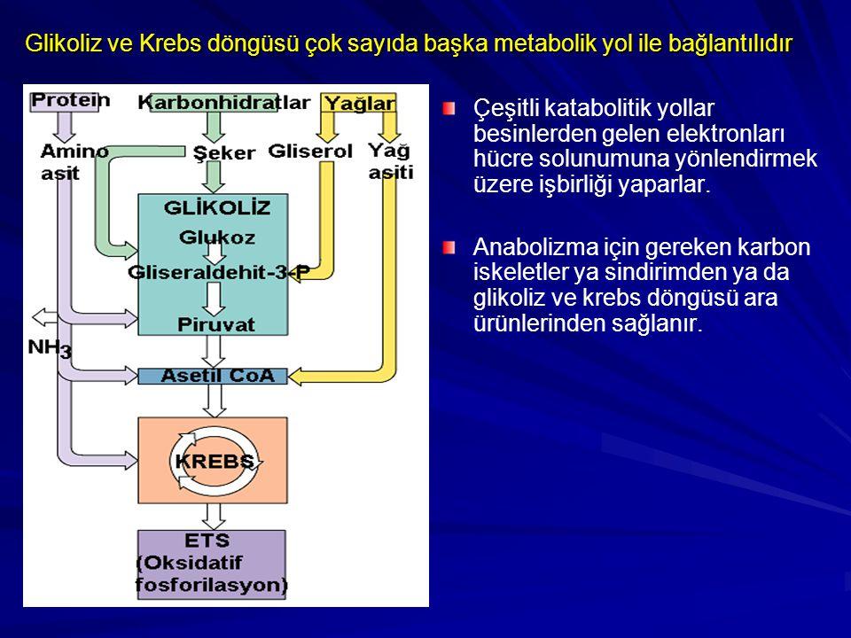 Glikoliz ve Krebs döngüsü çok sayıda başka metabolik yol ile bağlantılıdır