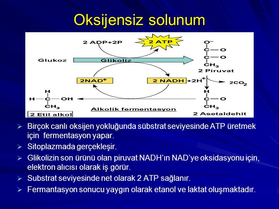 Oksijensiz solunum Birçok canlı oksijen yokluğunda sübstrat seviyesinde ATP üretmek için fermentasyon yapar.