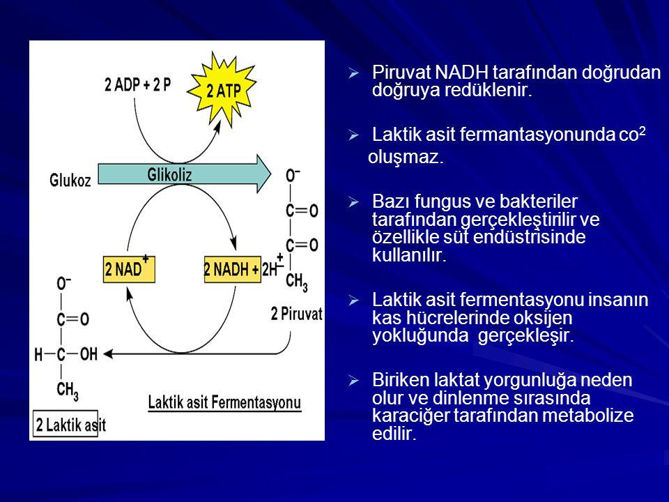 Piruvat NADH tarafından doğrudan doğruya redüklenir.
