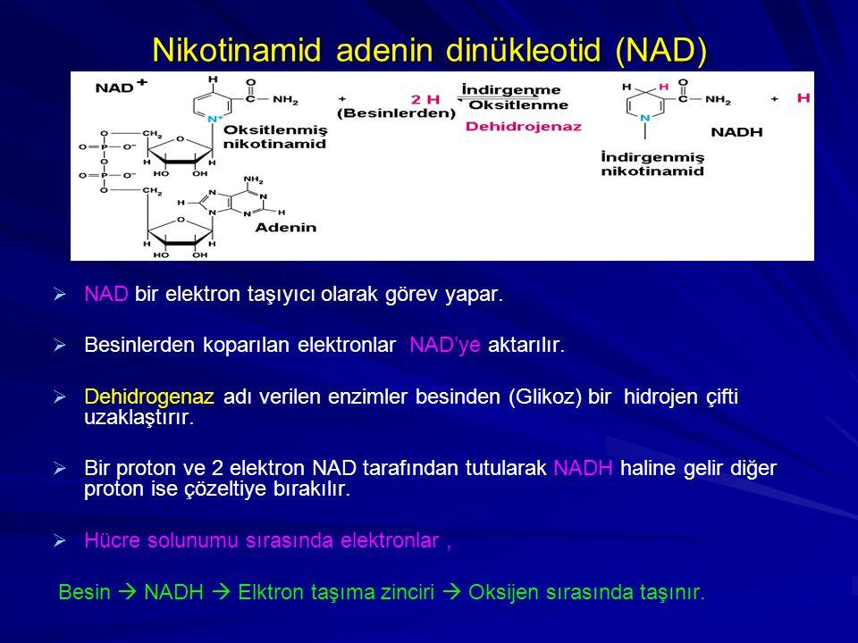 Nikotinamid adenin dinükleotid (NAD)