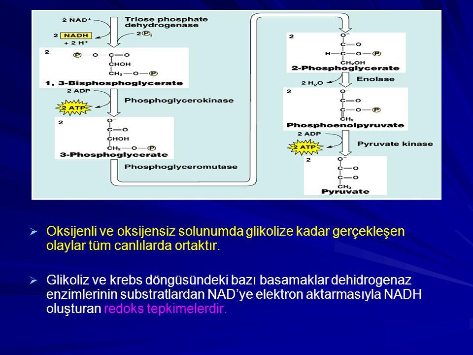 Oksijenli ve oksijensiz solunumda glikolize kadar gerçekleşen olaylar tüm canlılarda ortaktır.