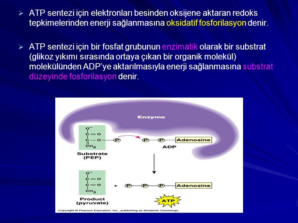 ATP sentezi için elektronları besinden oksijene aktaran redoks tepkimelerinden enerji sağlanmasına oksidatif fosforilasyon denir.