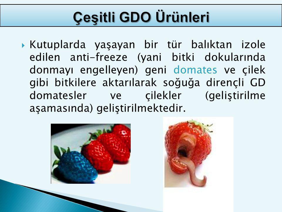 Çeşitli GDO Ürünleri