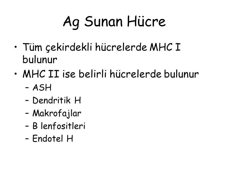 Ag Sunan Hücre Tüm çekirdekli hücrelerde MHC I bulunur