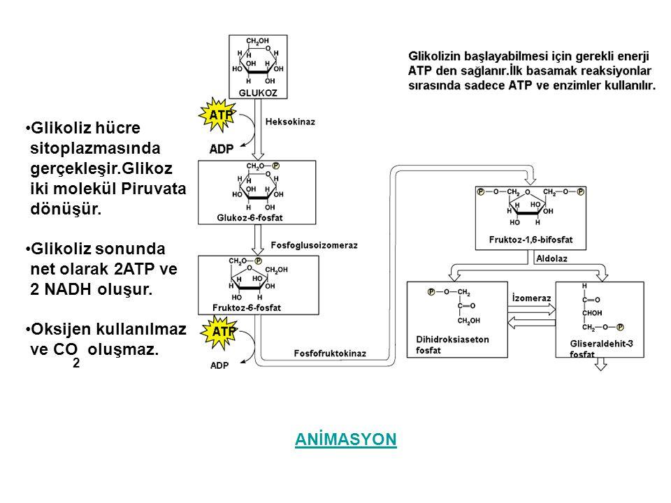 Glikoliz hücre sitoplazmasında gerçekleşir.Glikoz iki molekül Piruvata