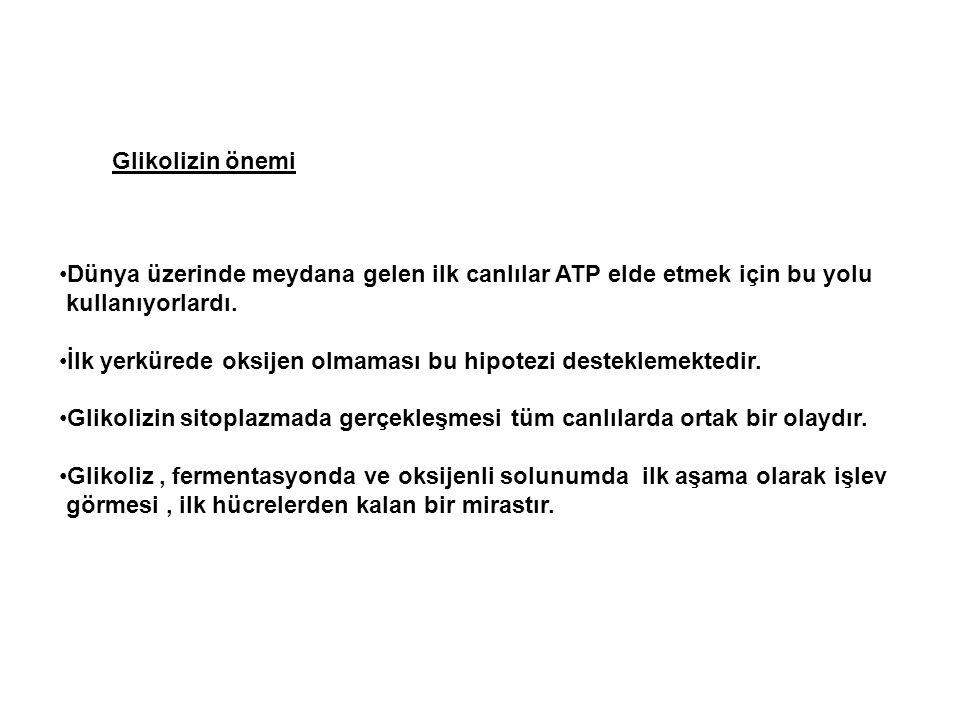 Glikolizin önemi Dünya üzerinde meydana gelen ilk canlılar ATP elde etmek için bu yolu. kullanıyorlardı.