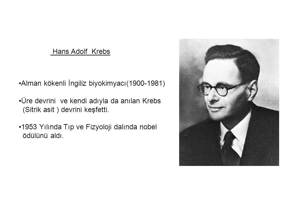 Hans Adolf Krebs Alman kökenli İngiliz biyokimyacı(1900-1981) Üre devrini ve kendi adıyla da anılan Krebs.