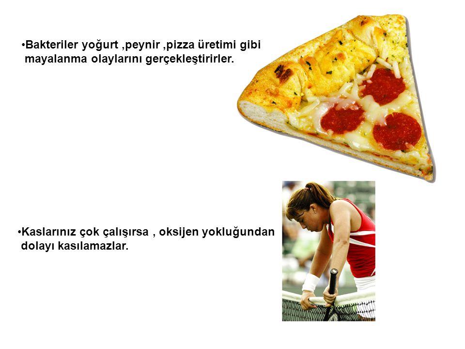 Bakteriler yoğurt ,peynir ,pizza üretimi gibi