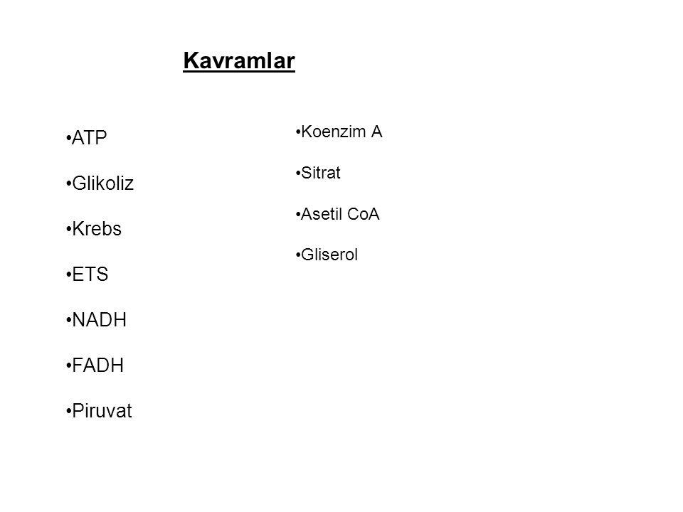 Kavramlar ATP Glikoliz Krebs ETS NADH FADH Piruvat Koenzim A Sitrat