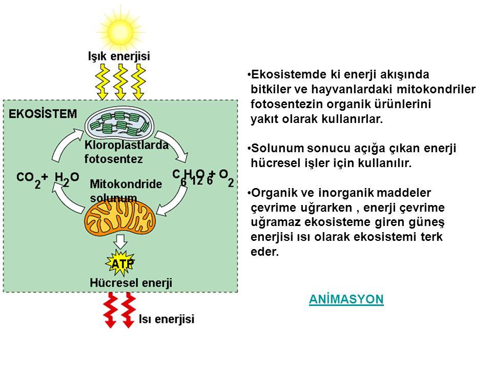 Ekosistemde ki enerji akışında