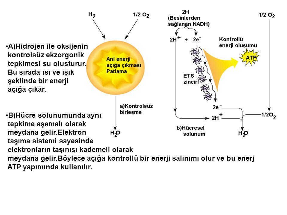 A)Hidrojen ile oksijenin