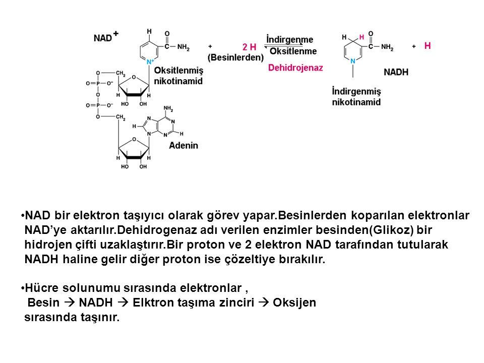 NAD bir elektron taşıyıcı olarak görev yapar