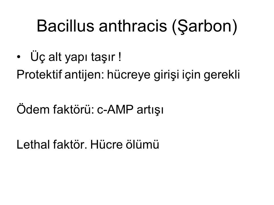 Bacillus anthracis (Şarbon)