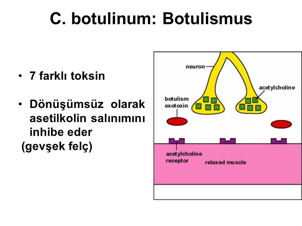 C. botulinum: Botulismus