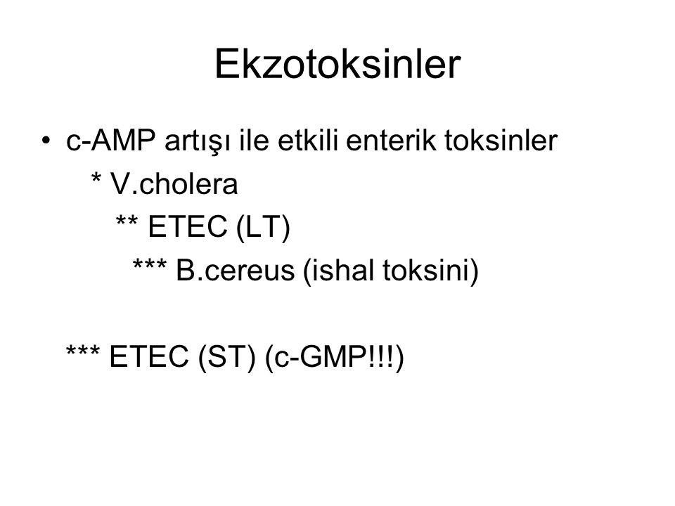 Ekzotoksinler c-AMP artışı ile etkili enterik toksinler * V.cholera