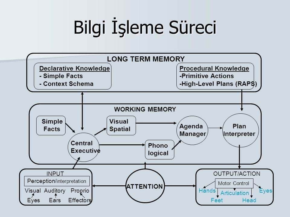 Bilgi İşleme Süreci LONG TERM MEMORY Declarative Knowledge