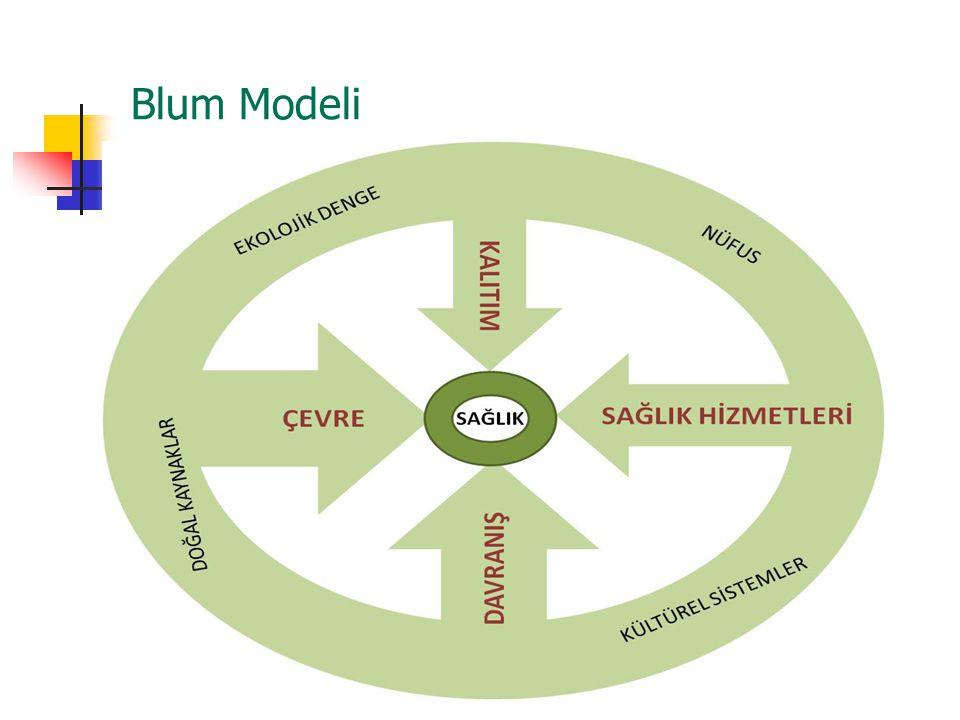 Blum Modeli