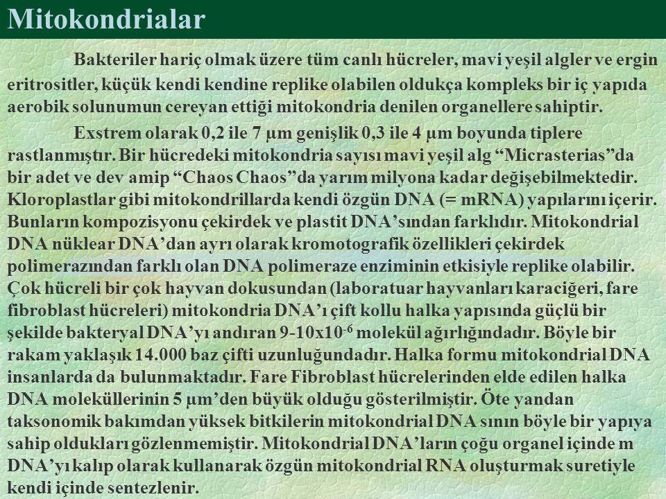 Mitokondrialar