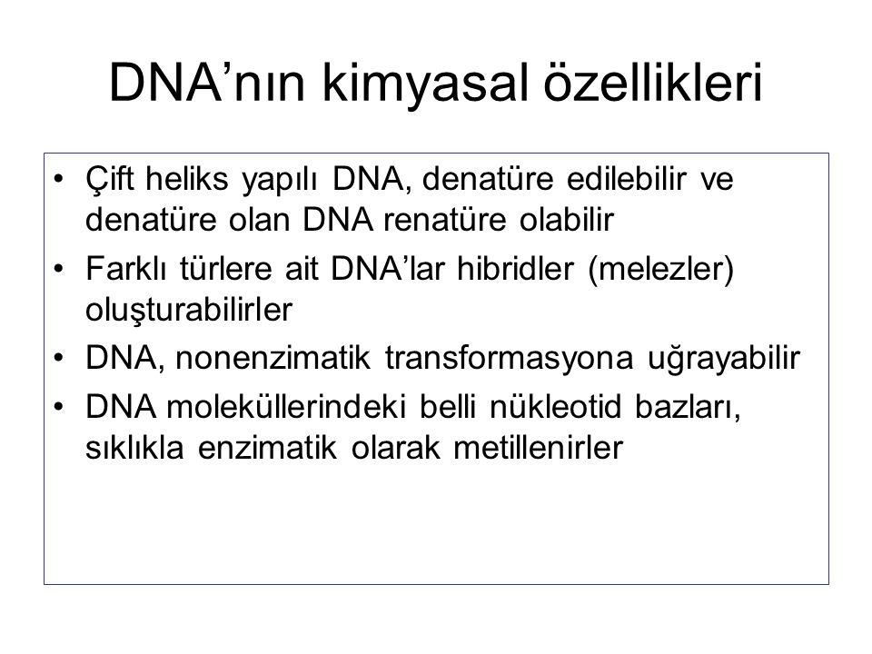 DNA'nın kimyasal özellikleri