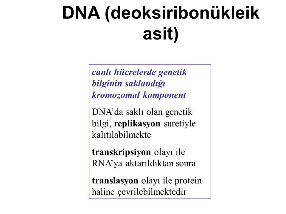 DNA (deoksiribonükleik asit)
