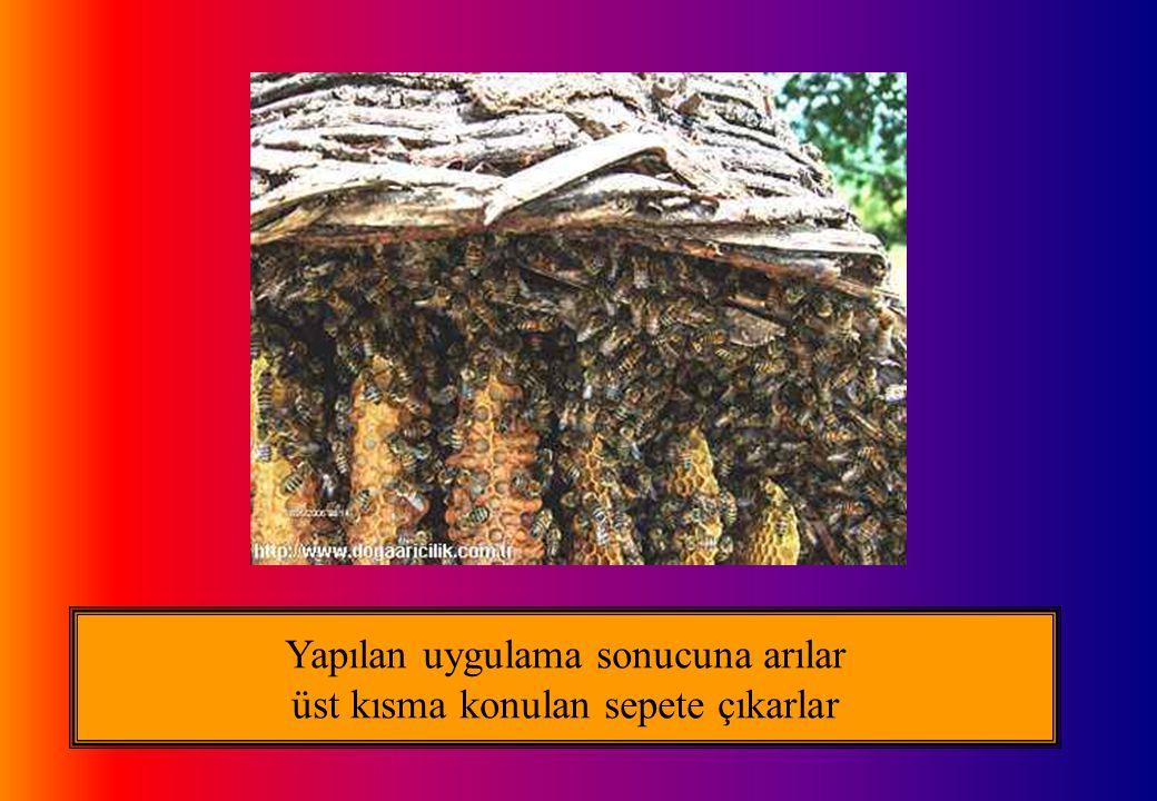 Yapılan uygulama sonucuna arılar üst kısma konulan sepete çıkarlar