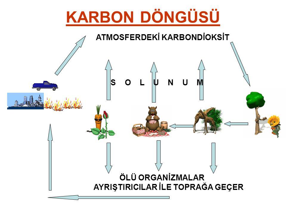 KARBON DÖNGÜSÜ ATMOSFERDEKİ KARBONDİOKSİT S O L U N U M