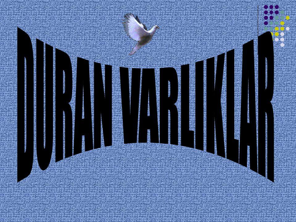 DURAN VARLIKLAR