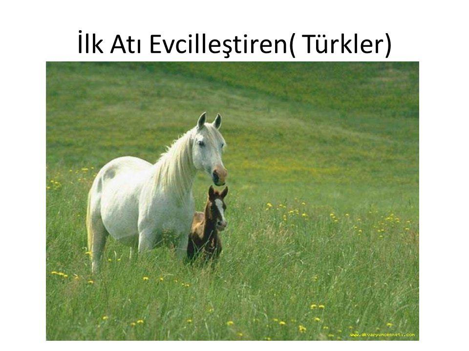 İlk Atı Evcilleştiren( Türkler)