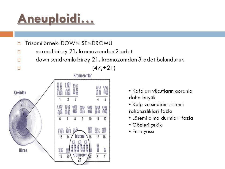 Aneuploidi… Trisomi örnek: DOWN SENDROMU