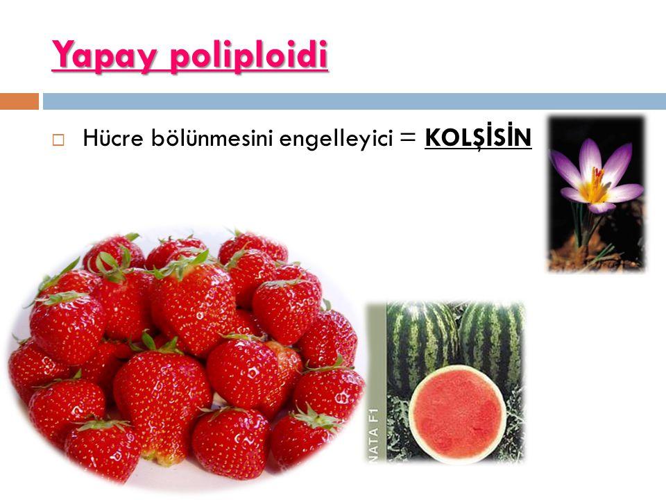 Yapay poliploidi Hücre bölünmesini engelleyici = KOLŞİSİN