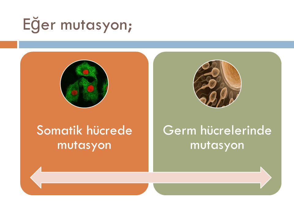 Eğer mutasyon; Somatik hücrede mutasyon Germ hücrelerinde mutasyon