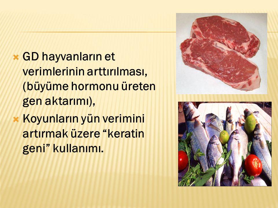 GD hayvanların et verimlerinin arttırılması, (büyüme hormonu üreten gen aktarımı),
