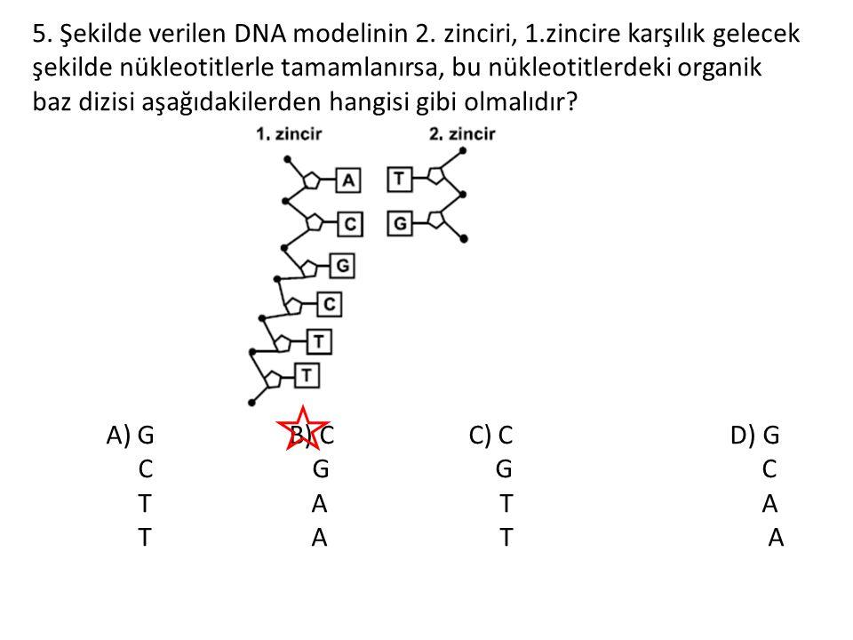 5. Şekilde verilen DNA modelinin 2. zinciri, 1
