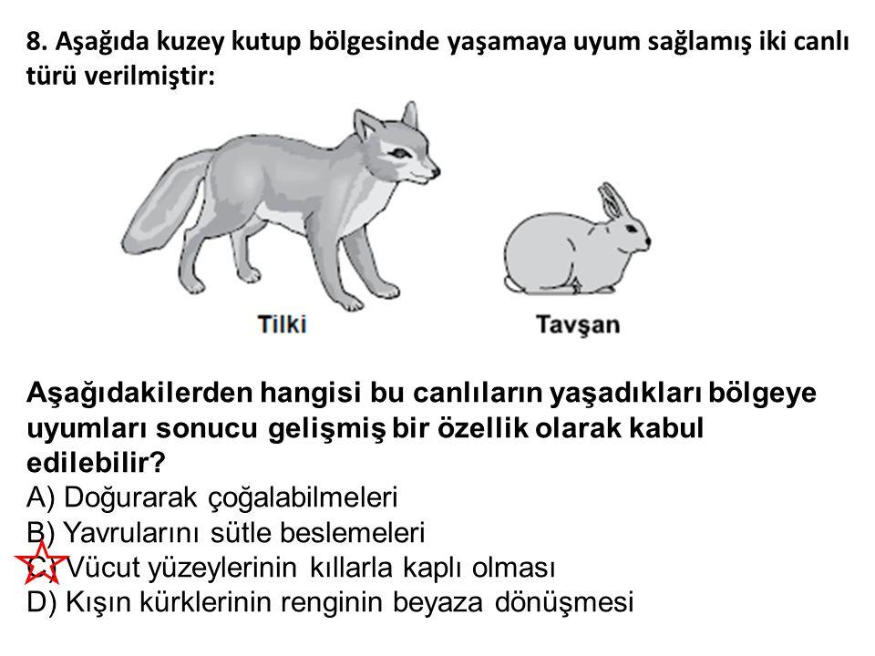 8. Aşağıda kuzey kutup bölgesinde yaşamaya uyum sağlamış iki canlı türü verilmiştir: