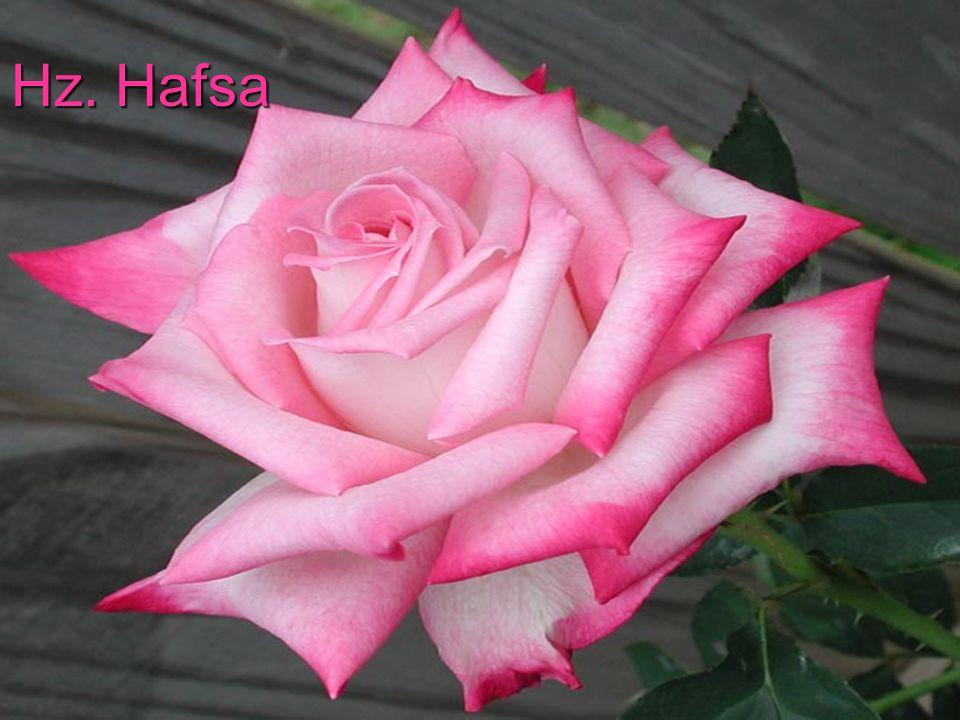 Hz. Hafsa
