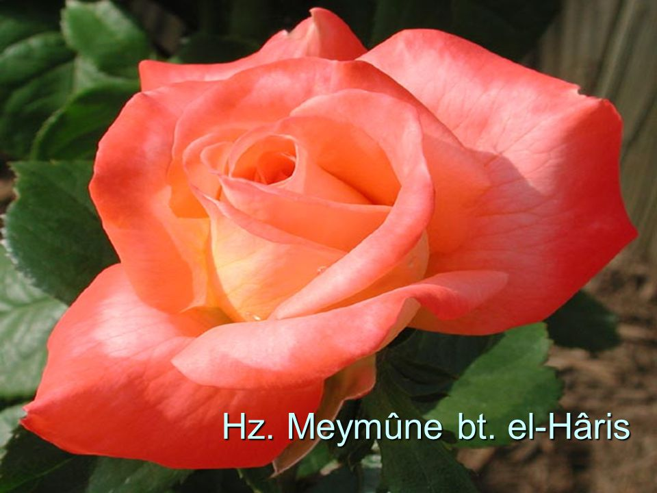 Hz. Meymûne bt. el-Hâris