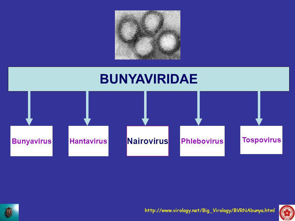BUNYAVIRIDAE Nairovirus Bunyavirus Hantavirus Phlebovirus Tospovirus