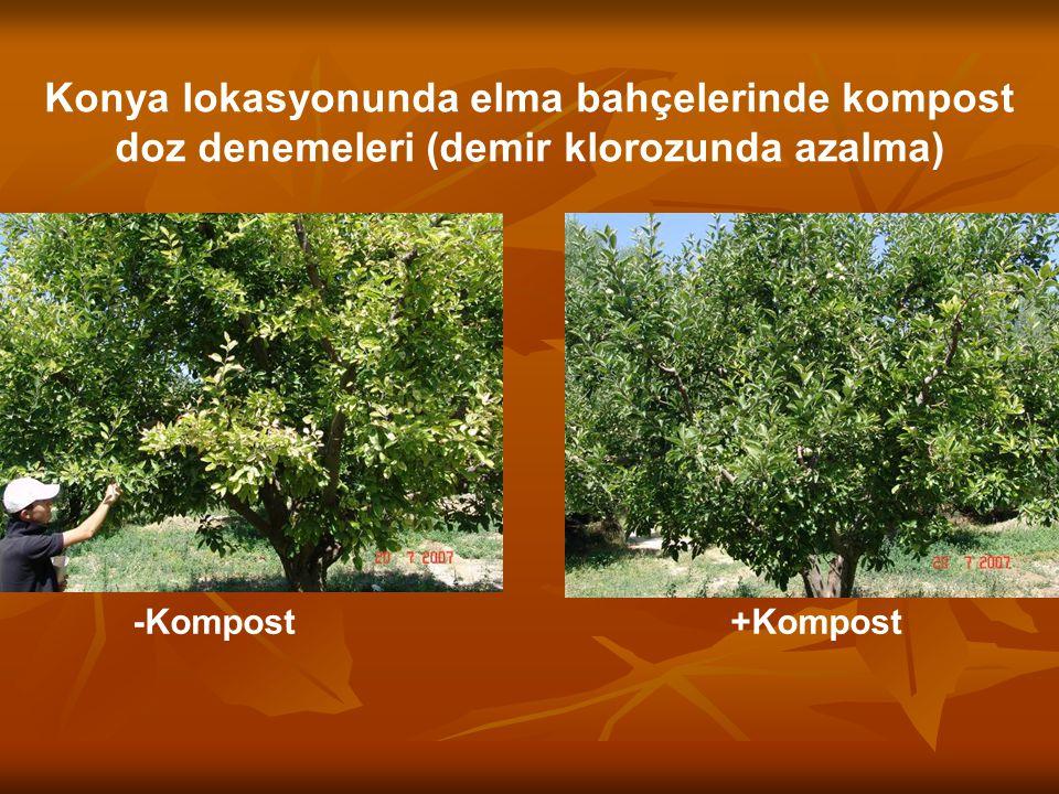 Konya lokasyonunda elma bahçelerinde kompost doz denemeleri (demir klorozunda azalma)