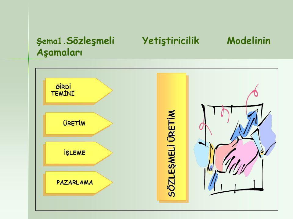 Şema1.Sözleşmeli Yetiştiricilik Modelinin Aşamaları