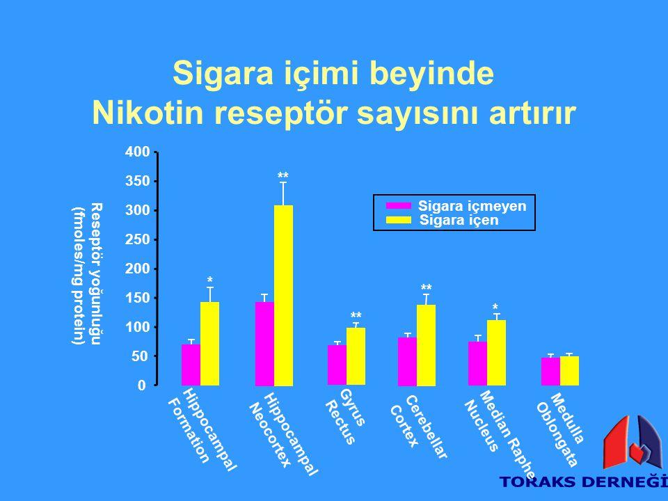 Nikotin reseptör sayısını artırır