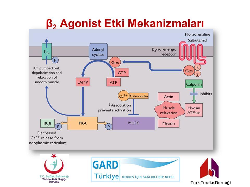 β2 Agonist Etki Mekanizmaları