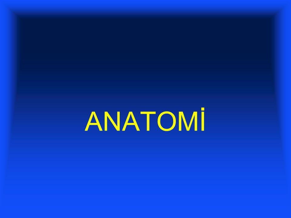 ANATOMİ 2 1 2