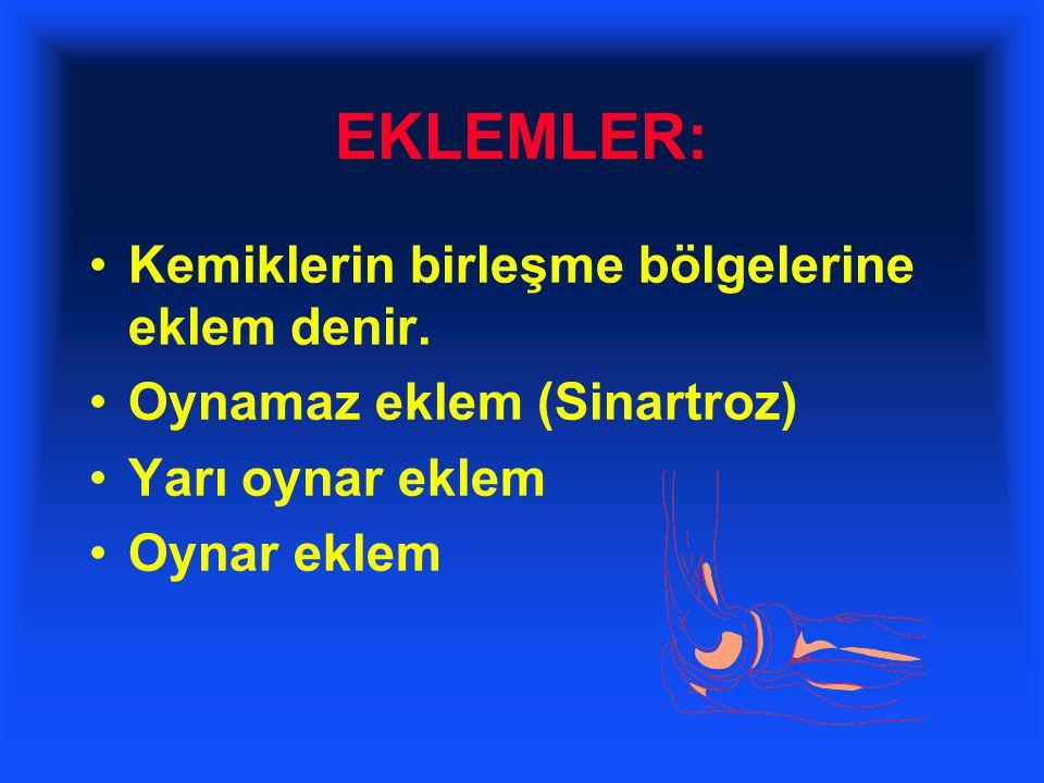 EKLEMLER: Kemiklerin birleşme bölgelerine eklem denir.