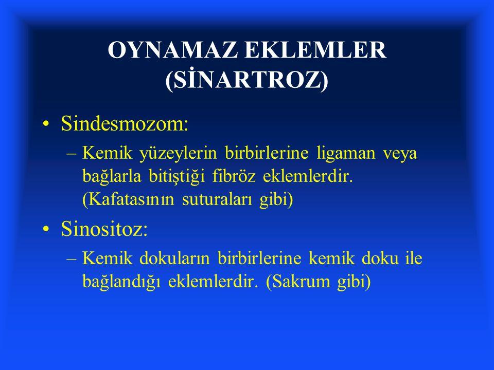 OYNAMAZ EKLEMLER (SİNARTROZ)