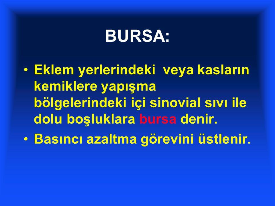 BURSA: Eklem yerlerindeki veya kasların kemiklere yapışma bölgelerindeki içi sinovial sıvı ile dolu boşluklara bursa denir.