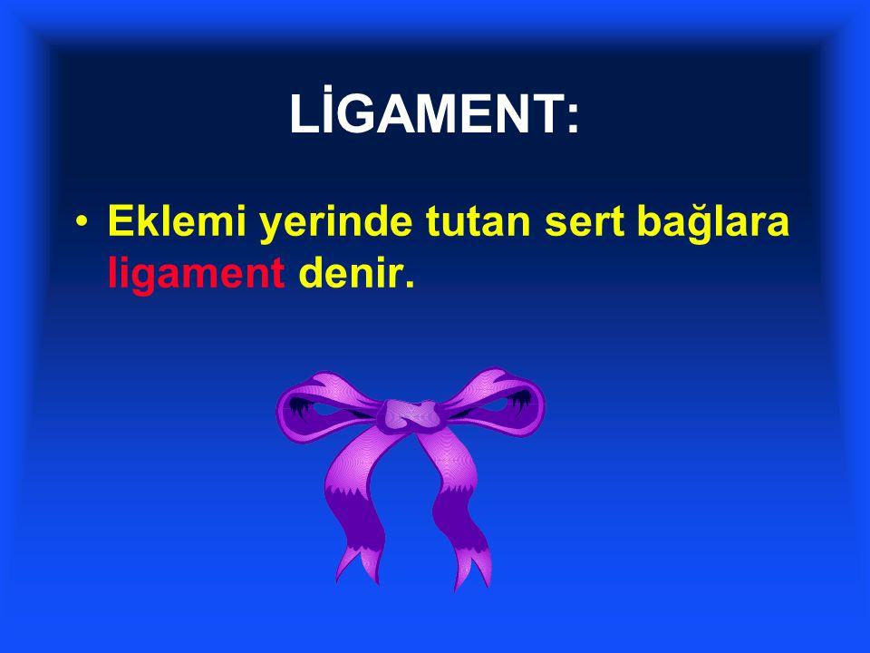 LİGAMENT: Eklemi yerinde tutan sert bağlara ligament denir. 27 26 27